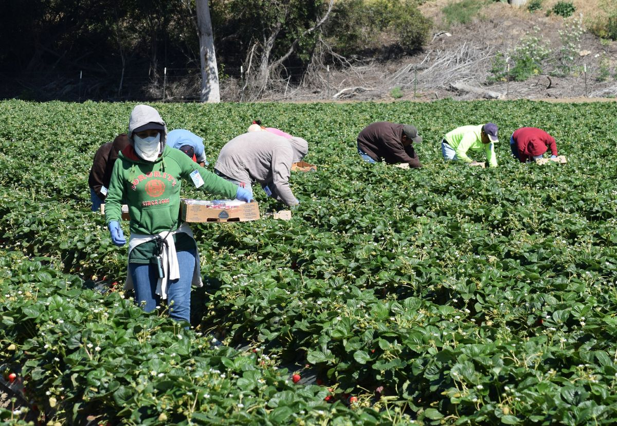 Agricultural workers in Salinas