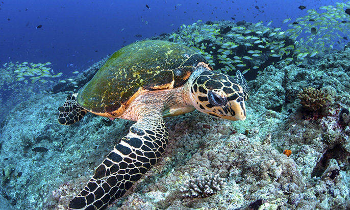A new study offers strategic guidance on the placement of marine protected areas to meet global conservation goals - See more at: http://www.news.ucsb.edu/2015/016205/protecting-ocean-species#sthash.aMH7GEAd.PcNMUi3Q.dpuf