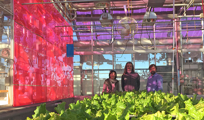 Melissa Osborn and two others standing in a Soliculture greenhouse