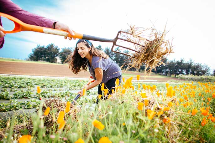 Victoria Salas works on the UC Santa Cruz farm