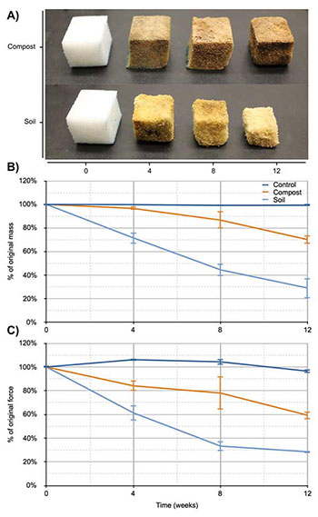 Chart illustrating biodegradation of PU cubes over 12 weeks.
