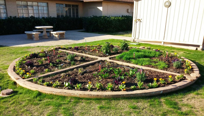 The newly planted pizza garden at the UC Desert Research and Extension Center in Holtville.
