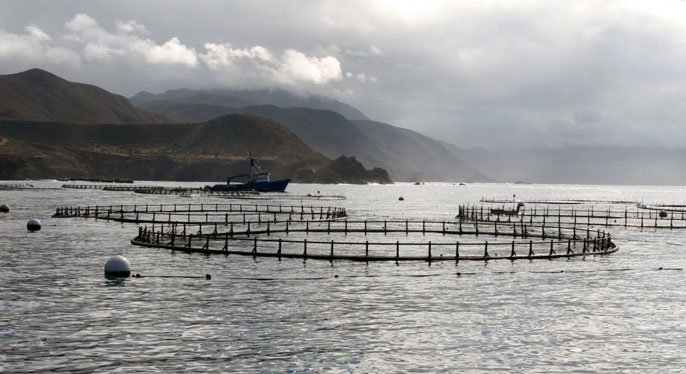 Aquaculture study