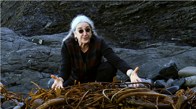 Prof. Miller with seaweed