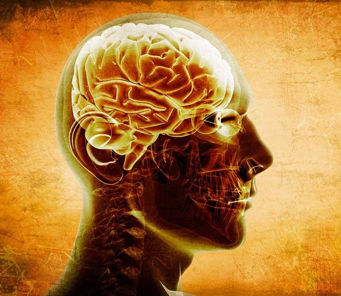 brain (iStock)