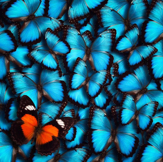 UC San Diego butterfly wings