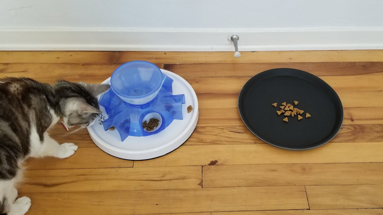 A cat looks at a food puzzle