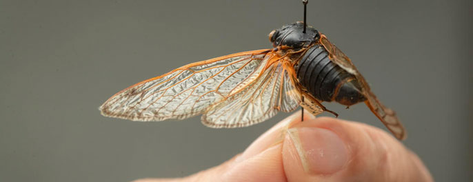 Close-up cicada photo
