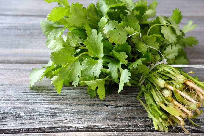 Cilantro on a grey table