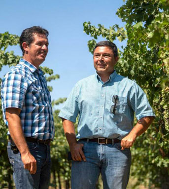 Two men stand between rows of wine grapes
