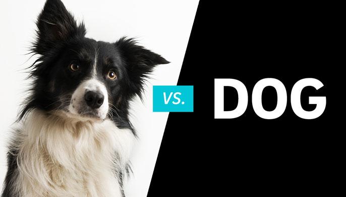 Dog vs dog UC San Diego