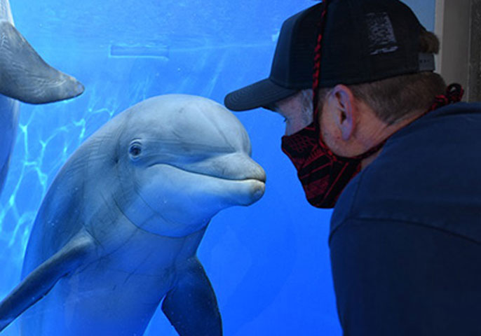 Dolphin encountering a man with a mask