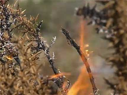 fire in dry foliage