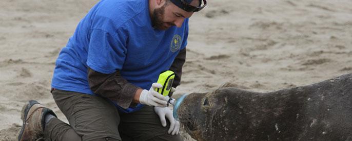 UC San Diego elephant seals