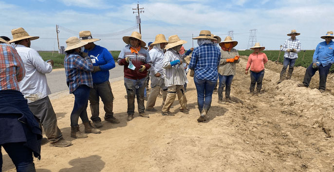 Farmworkers standing outside in a line next to a field