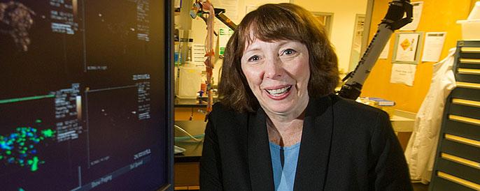 Katherine Whittaker Ferrara, distinguished professor of biomedical engineering
