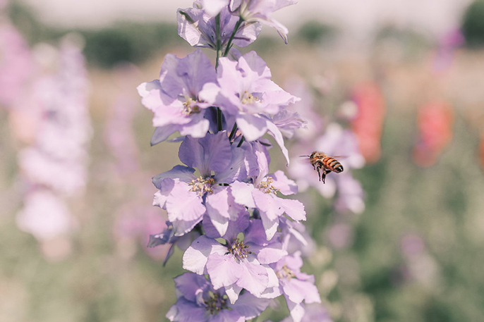 food podcast UC Berkeley