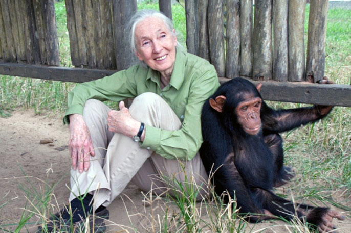 Jane Goodall sitting with a chimp