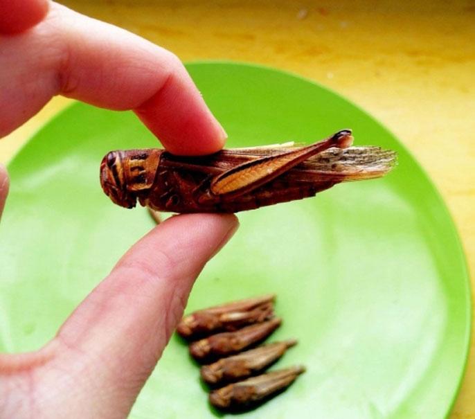Grasshopper above a plate
