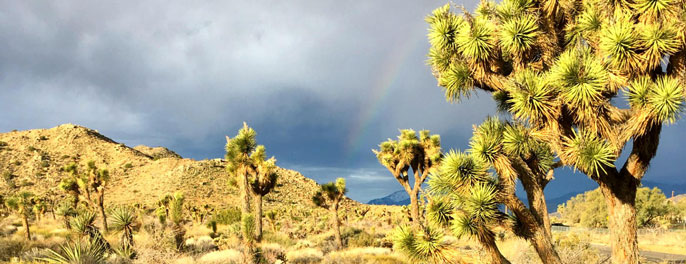 Joshua Tree National Park with a rainbow