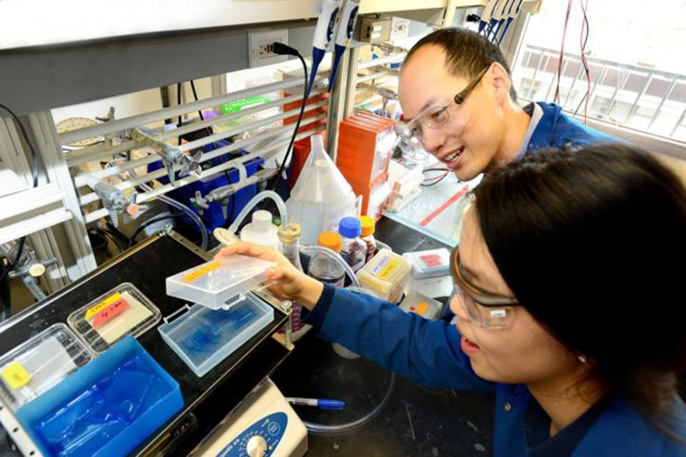 Chris Chang and UC Berkeley graduate student Sumin Lee carry out experiments to find proteins that bind to copper and potentially influence the storage and burning of fat.