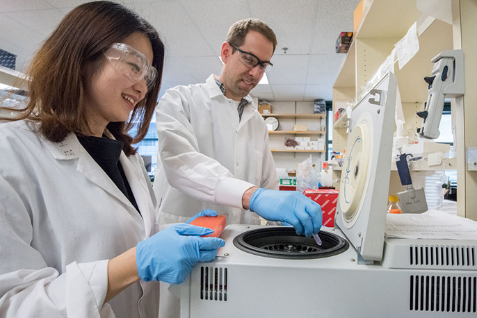 Researchers Pin Wang (left) and Antoine Snijders investigate blood cells collected from mice exposed to thirdhand smoke.