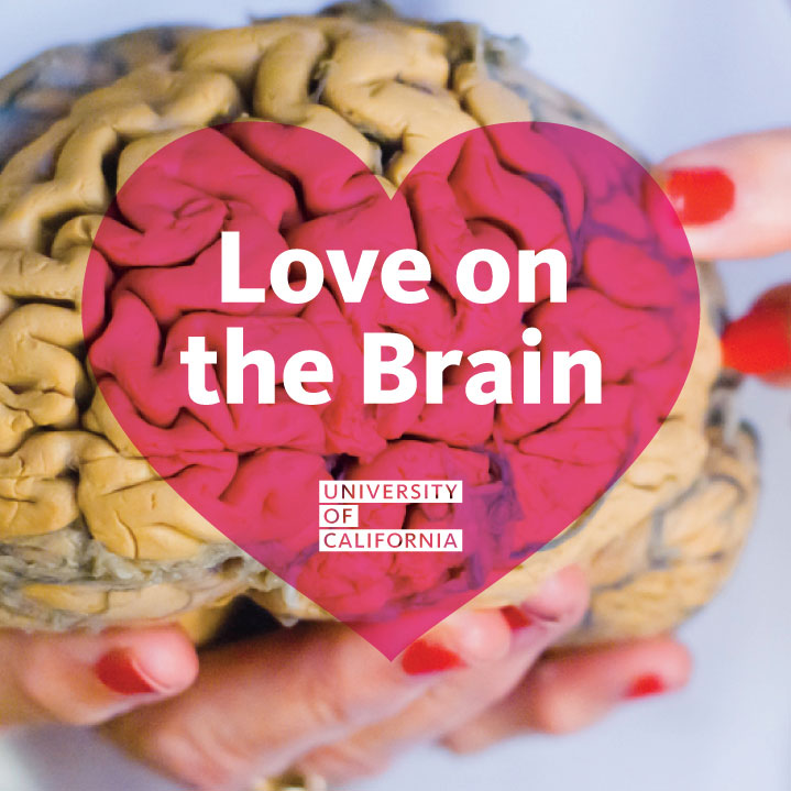 This is your brain on love | University of California