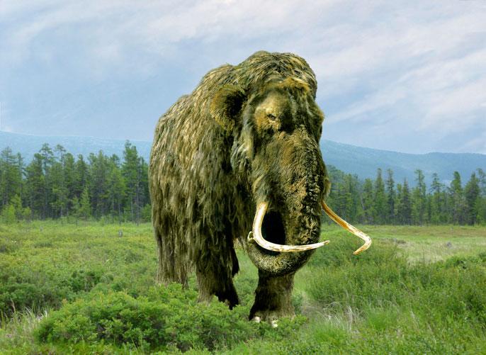 UC San Diego mammoth