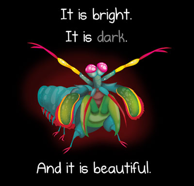 The beautiful mantis shrimp