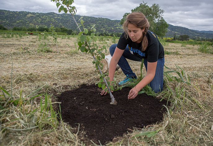 UC Global Food Initiative fellow Holly Mayton of UC Riverside spreads compost around a fruit tree during a field trip to Full Belly Farm in the Capay Valley.