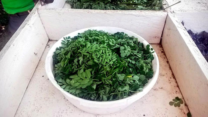 A bowl of moringa