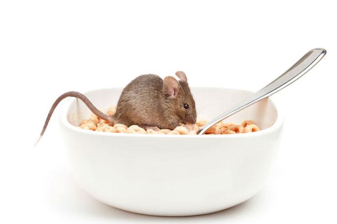 Mouse cheerio Berkeley