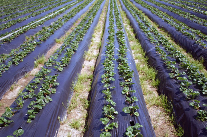 A field of crops