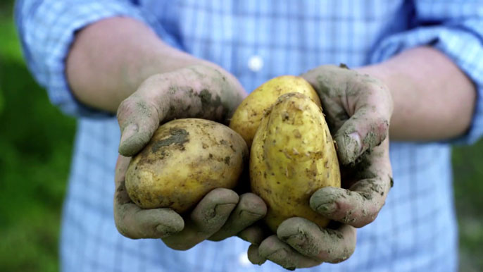 Potatoes in hand