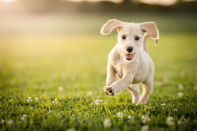 Puppy playing on a green lawn