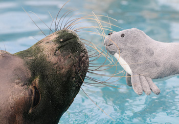 Toy seal raises funds for the real thing