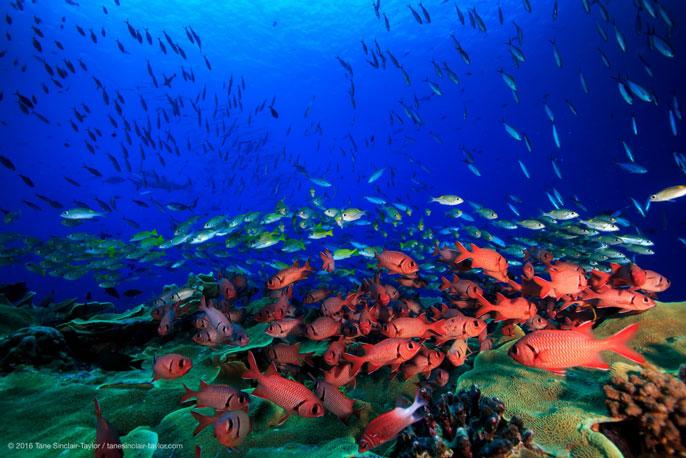 UC Santa Barbara reef underwater