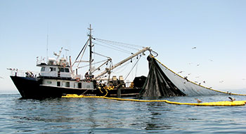 sardine fishing boat, Gulf of California