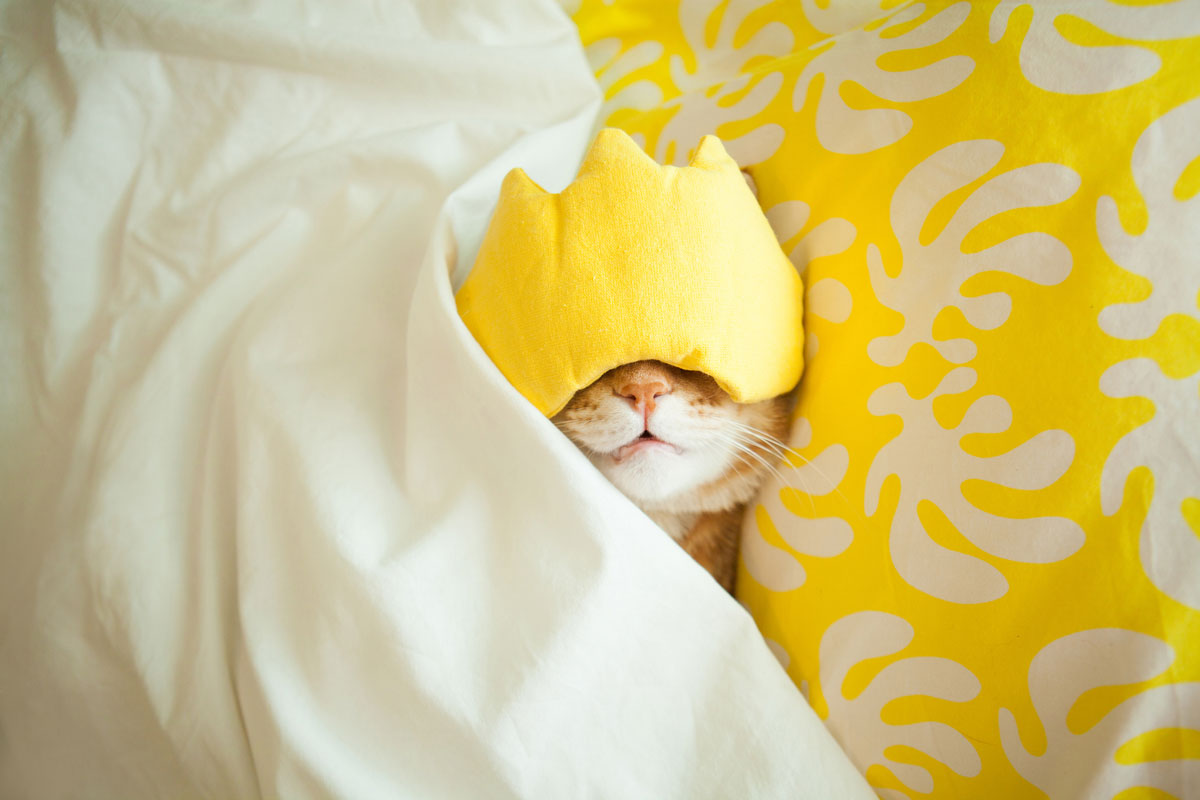 Cat sleeping through morning with mask on head