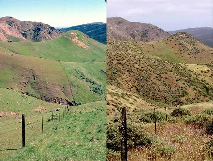 Santa Cruz Island, 1980 (left) and 2008