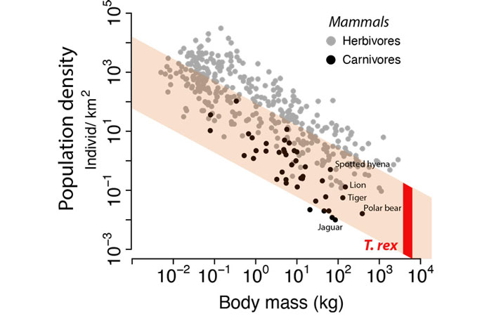 Graph of how predator density compares with prey density. In this chart of body mass versus population density of living mammals, the image shows that t rexs had low population density and high body mass