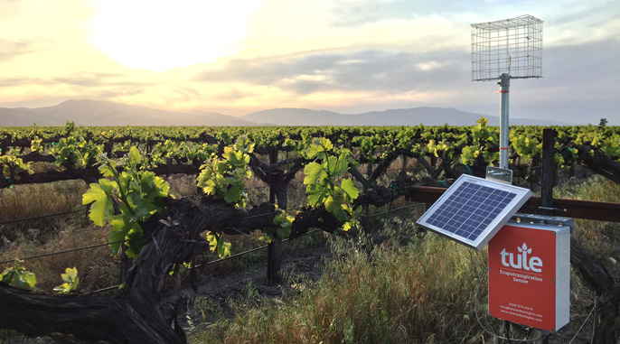 Tule Technologies insatallation in a California vineyard