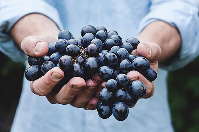 UC Davis grapes