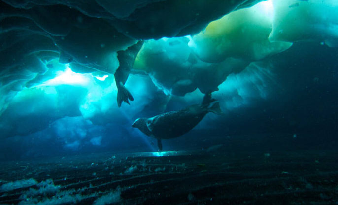 UC Davis seals cold