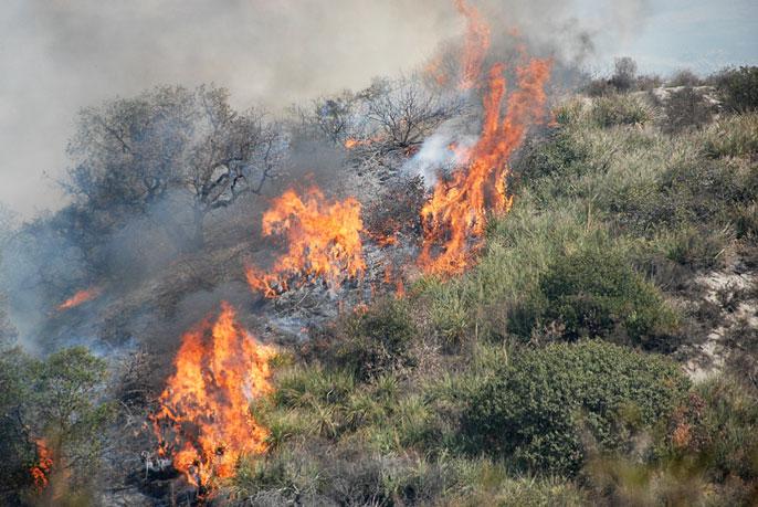 UC Riverside wildfire
