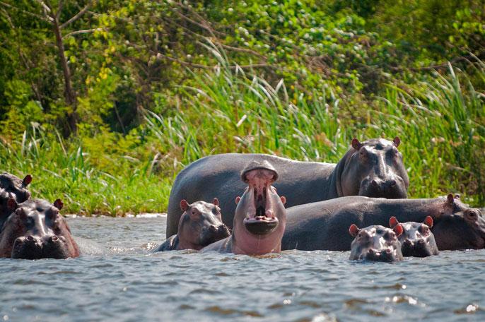 UC San Diego hippos zoo