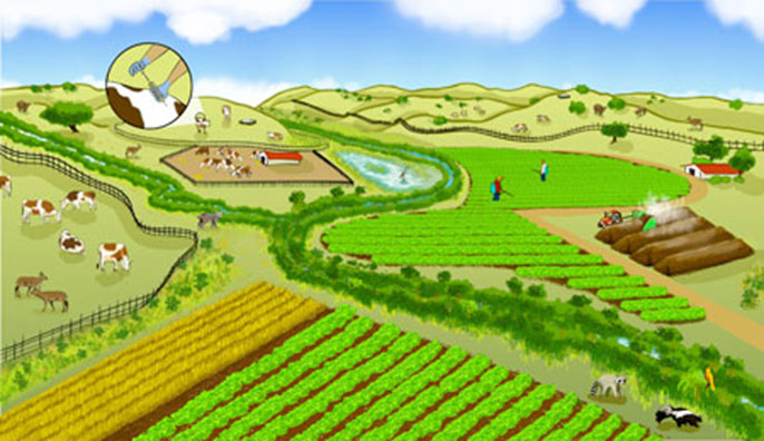 A farming landscape can be co-managed for both produce safety and nature conservation. Promising practices include buffering farm fields with non-crop vegetation to filter pathogens from runoff and planting low-risk crops between leafy green vegetables an