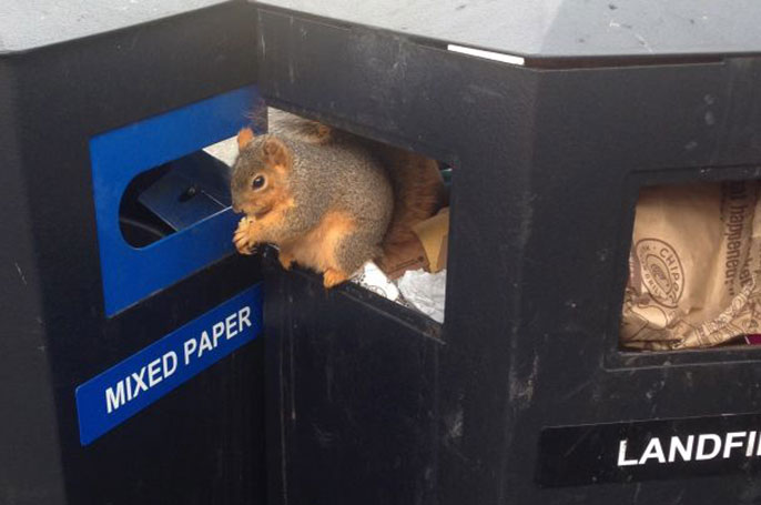 Trash from Telegraph Avenue food vendors accounts for much of the waste found in Sproul Plaza landfill bins.