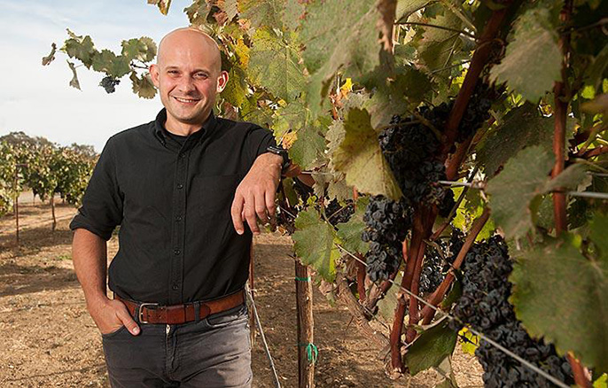 UC Davis plant geneticist Dario Cantu used a new sequencing technology and computer algorithm to produce a high-quality draft genome sequence of the cabernet sauvignon wine grape.