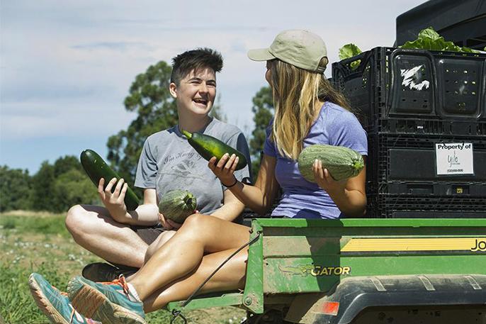 UC Davis students Carli Hambley, left, and Lexi Fujii helped organize the glean in June.